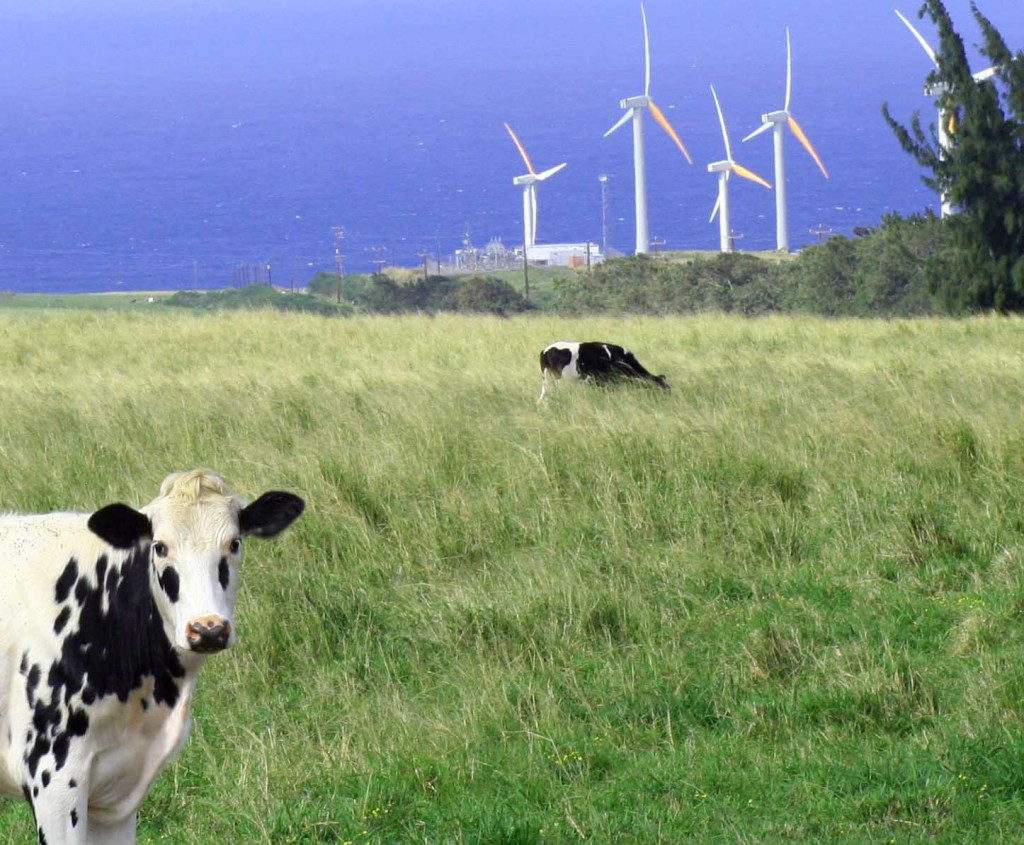 Wind farm in Kohala, Big Island of Hawaii
