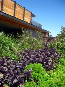 bardessono organic garden