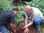 Sarinbuana Eco-lodge, Bali - planting trees in the rainforest