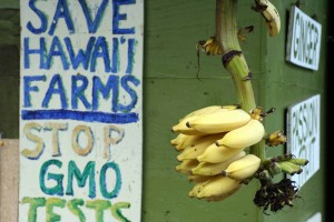 Anti-GMO sign at Laulima Farms in Kipahulu, Maui, Hawaii, USA