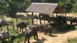 Asian Oasis: Thai eco trinity