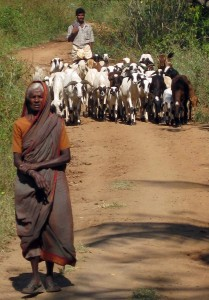 Goat herders on the bullock cart path in Tamil Nadu