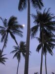 Beach palms - Six Senses Hua Hin, Thailand