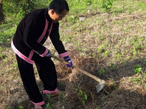 Planting organic trees and herbs for the king - Lanjia Lodge, northern Thailand