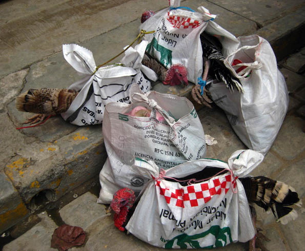 Turkeys in a bag at Ocotlan market in Oaxaca, Mexico