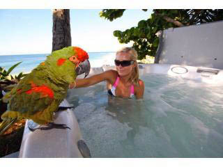 Parrot and hot tub girl, Chun's Reef B and B on North Shore Oahu, Hawaii, USA