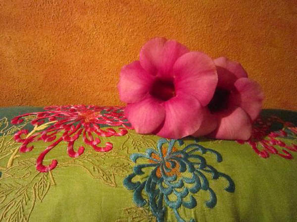 Hibiscus blossom on bed, Hotel Cielo Rojo in San Francisco, Nayarit, Mexico