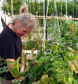 Dianne Kushner in her organic garden, Rancho Casa Luna in San Miguel de Allende, Guanajuato, Mexico