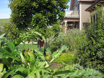 Gardens, Cass House Inn in Cayucos, California USA