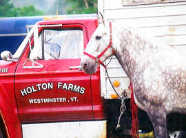 Red truck and horse Holton Farms in Westminster, Vermont USA