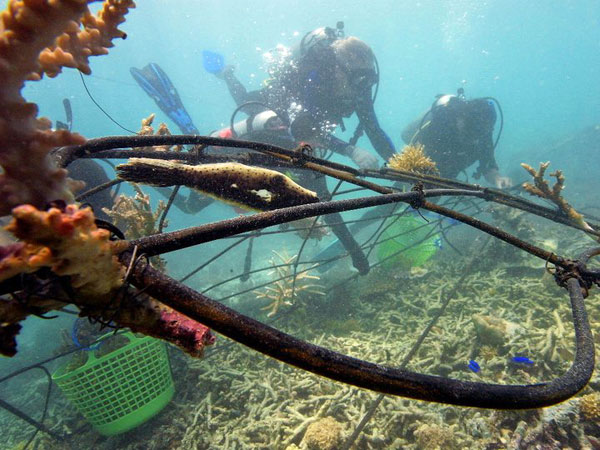 Installing Biorock reef in Gili Islands, Indonesia