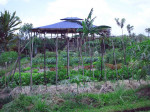 Ubud, Bali: Sari Organic Farm and Overflowing Basket Café