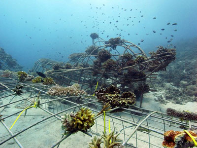 Growing a Biorock reef, Gili Eco Trust on the Gili Islands, Indonesia