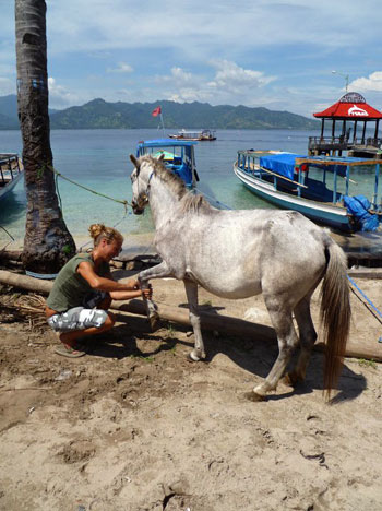 Delphine Robbe, Gili Eco Trust, conducts horse clinic on the Gili Islands, Indonesia