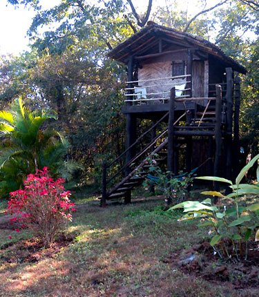 Treehouse, Hermitage Guest House in the Western Ghats, Karnataka state, India