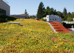 Living green roof, H2Hotel in Healdsburg, Calif., USA