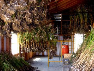 Garlic drying barn, Whistling Duck Farm in Applegate Valley, Oregon, USA