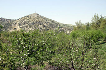 Horsh Ehden Nature Reserve in northern Lebanon