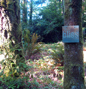 Bliss, WildSpring Guest Habitat in Port Orford, Ore., USA