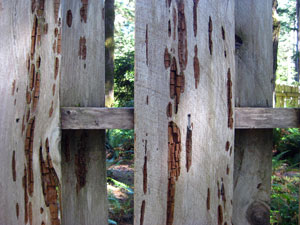 Weathered fence, WildSpring Guest Habitat in Port Orford, Ore., USA