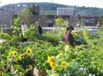 Eco-tourism in Montreal: rooftop farms