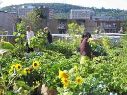 Ecotourism in Montreal : rooftop farming