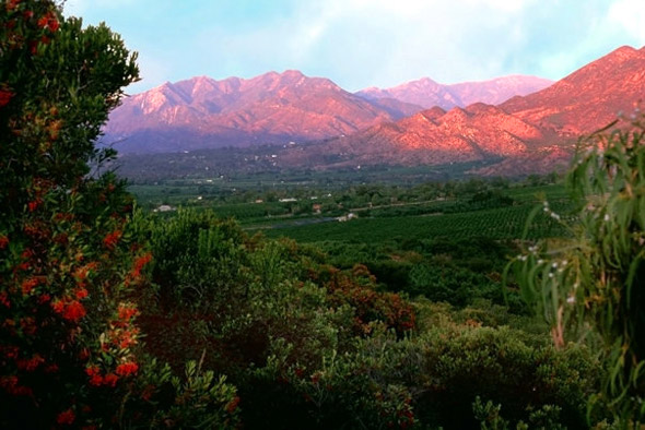 Pink and green moments in Ojai