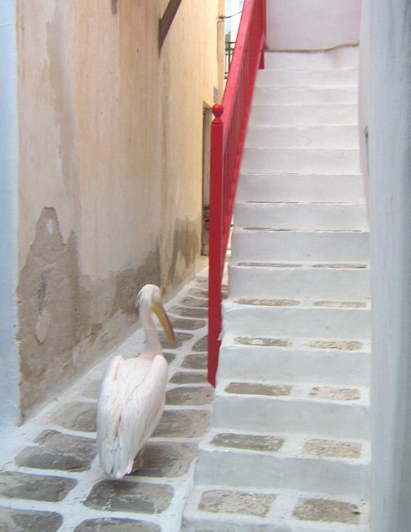 Pelican wandering Mykonos Town - Mykonos, Greece