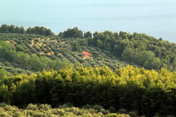 Eleonas Agrotouristic Hotel amid olive groves- Evia, Greece