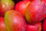 mexico-nayarit-mangos