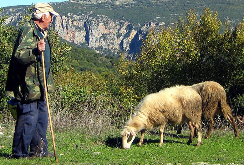 Shepherd in the Zagori region of the Pindus Mountains - near Mikro Papigo, Greece