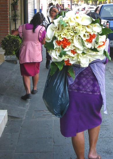 Calla lily vendor - Coatepec, Veracruz, Mexico