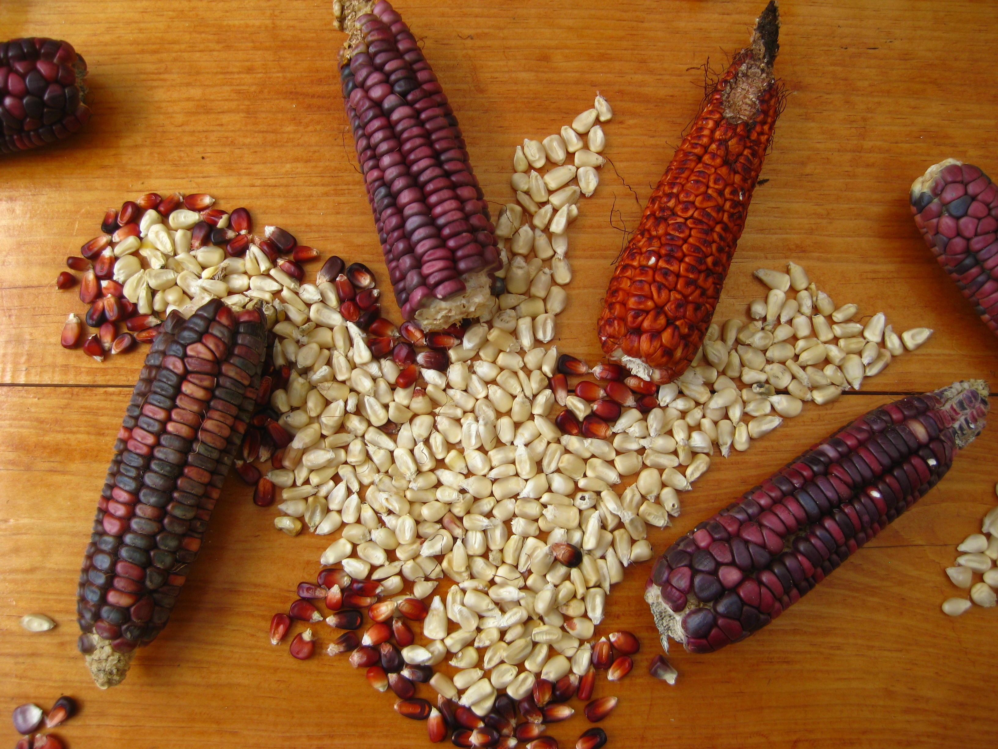Semana de Maiz Croillo at Via Organica - San Miguel de Allende, Mexico