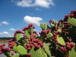 San Miguel de Allende's own eco-escape: El Charco del Ingenio