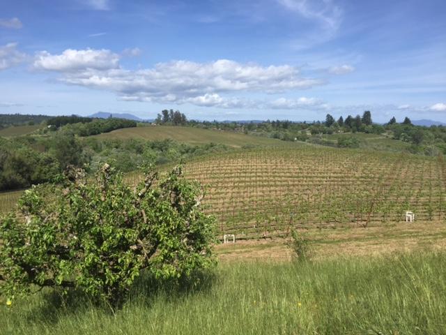 Tuscany-like views at Iron Horse Vineyard - Green Valley, Calif.